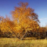 Осенний пейзаж :: Ирина