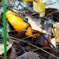 Хитрая лисичка спряталась под листья. :: Александр Крылов