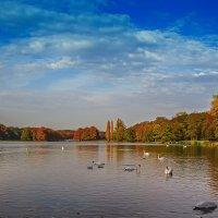 Лебединое озеро :: Alexander Andronik