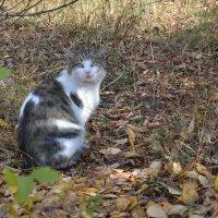 Осенний кот... :: Георгиевич