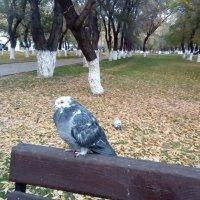 Спортивные соревнования почтовых голубей :: Андрей Хлопонин