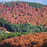 Autumn in forest :: Nikola Ivanovski