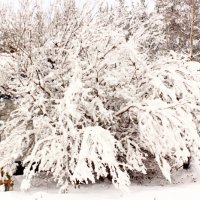 Много  снега навалило.. :: Галина Полина
