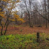 Пргулки в Осеннем Парке :: юрий поляков