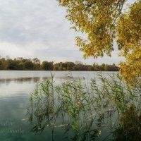 Осенний бриз на городском пруду :: Сергей Шаталов