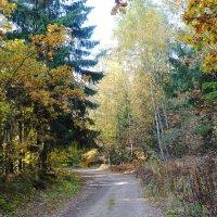 В октябрьском лесу :: Маргарита Батырева