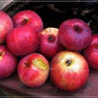 Яблоки :: muh5257