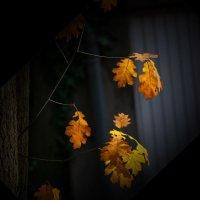 Осень :: Nikolai Martens