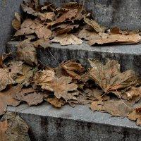 Осень...Грустная пора. :: Валерий Пегушев