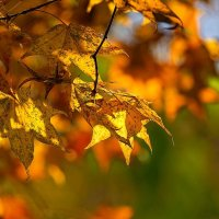 Осенний микс :: Арина