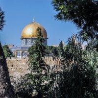 Израиль..2019 сентябрь...Иерусалим :: Юрий Яньков