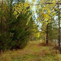 Лес в ожидании зимы... :: Нэля Лысенко