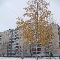 Первый снег :: Наталья Герасимова
