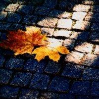 Осень 7 :: Елена Куприянова