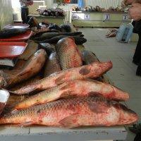 Вторник -рыбный день ) :: Николай Сапегин