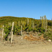 Горы и долина виноградников :: Варвара