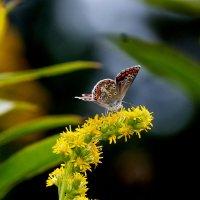 и снова бабочки..17 :: Александр Прокудин