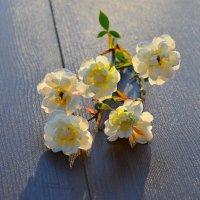 Осенние цветы :: Miola