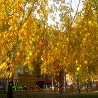 Золото октября :: Елена Семигина