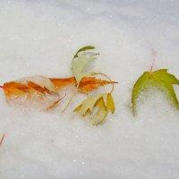 Жёлтые листья украсили снег :: Елен@Ёлочка К.Е.Т.