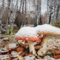 Попали под первый снег :: Ольга Соколова