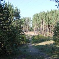 На прогулке в лесопарке :: Олег Афанасьевич Сергеев