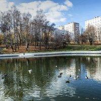 Пруд, Ясенево, Москва :: Лариса Батурова
