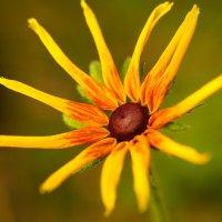 Цветы октября :: Иван Литвинов