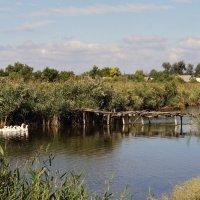 Плыли к Марусе белые гуси :: Alex Chernavski