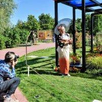 В саду Мондриан ... :: Анатолий Колосов
