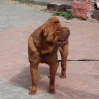 Милый пёсик охраняет костромской дворик :: Gen Vel