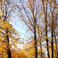 Осень в парке :: Tatjana