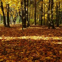 Осенний парк :: Милешкин Владимир Алексеевич