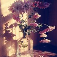 хризантемы :: людмила дзюба