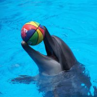 Любимый мяч :: Наталия Григорьева