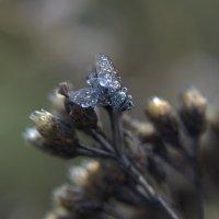 муха в росе :: лиана алексеева