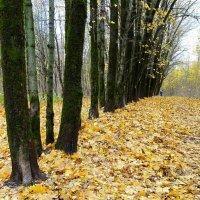 Осень в парке городском :: Милешкин Владимир Алексеевич