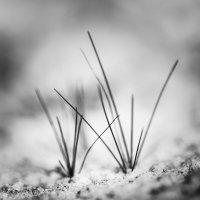 Трава обыкновенная :: Александра Никитина