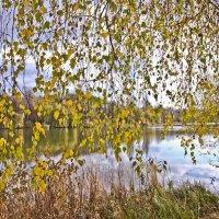 Осенний занавес :: Ольга Винницкая (Olenka)