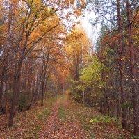 Старая лесная дорога :: Андрей Снегерёв