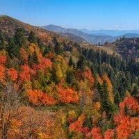 Осень в горах Кавказа. Красная Поляна :: Ольга Соколова