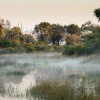 Утренний туман :: Андрей Артамонов (artamonoff2009)