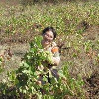 сборщица винограда :: ИРЭН@ .