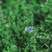 Лето в в высокой траве :: Светлана Карнаух