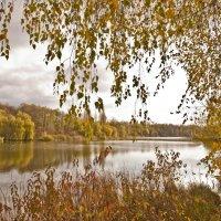На желто-зеленых берегах :: Ольга Винницкая (Olenka)