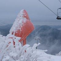 Обросли снегом :: Валерий Михмель