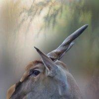 Канна (антилопа) :: dana smirnova