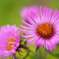 Осенние цветы :: Иван Литвинов