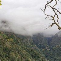 Влажные эвкалиптовые леса Мадейры. :: Анастасия Богатова
