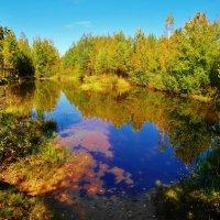 лесное озеро :: Владимир